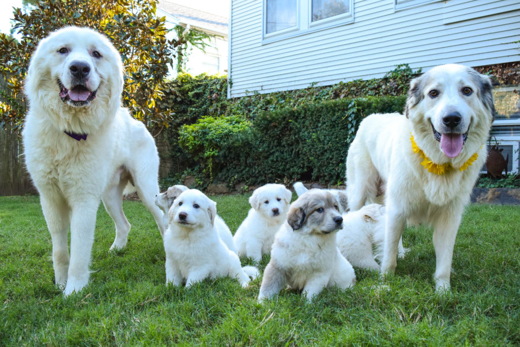 Pyr Family
