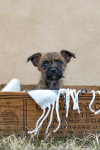 Ron - male, terrier mix