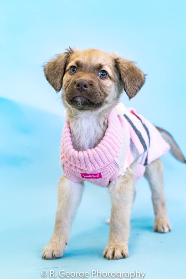 Puppy Haven Rescue We Are A Non Profit Dog Rescue Located In